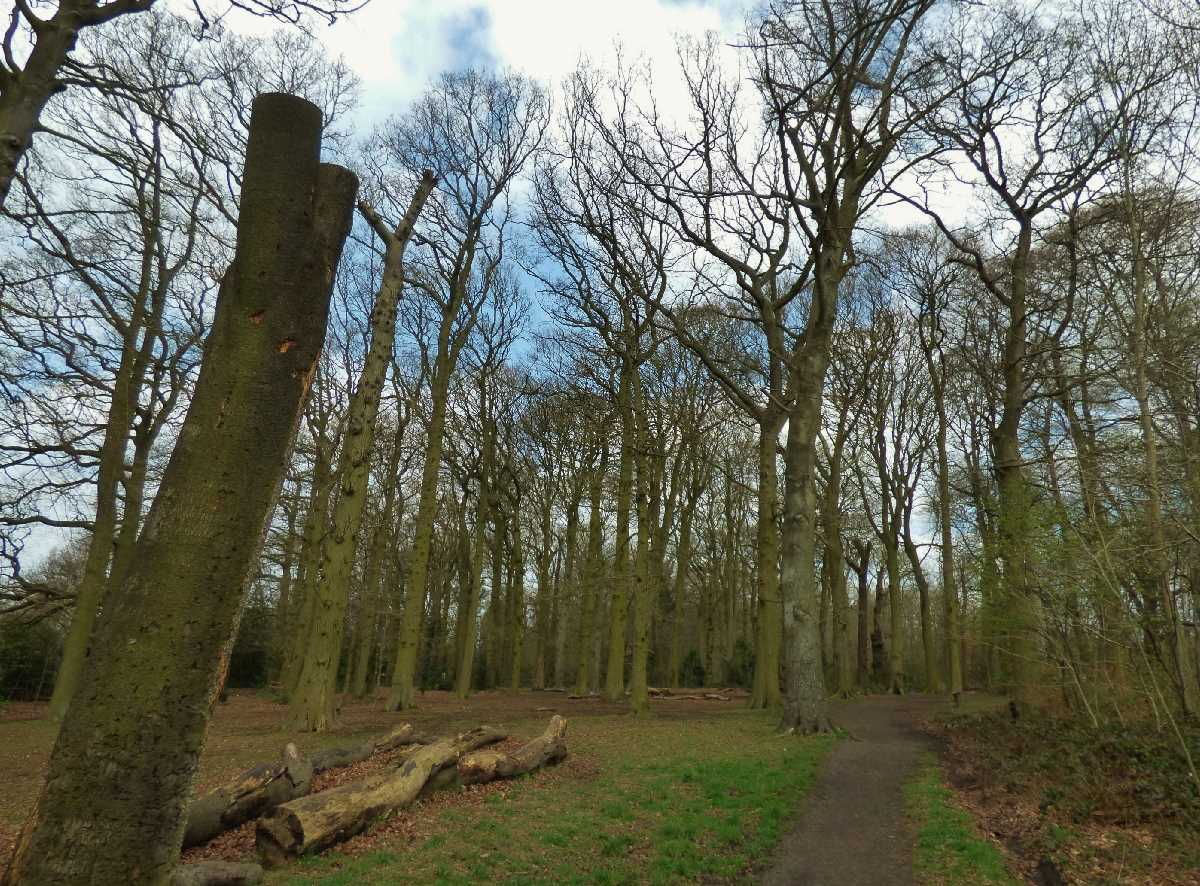 Holders Lane Woods, Birmingham - A hidden gem!